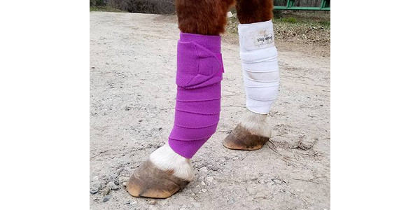 How to protect your horse's legs