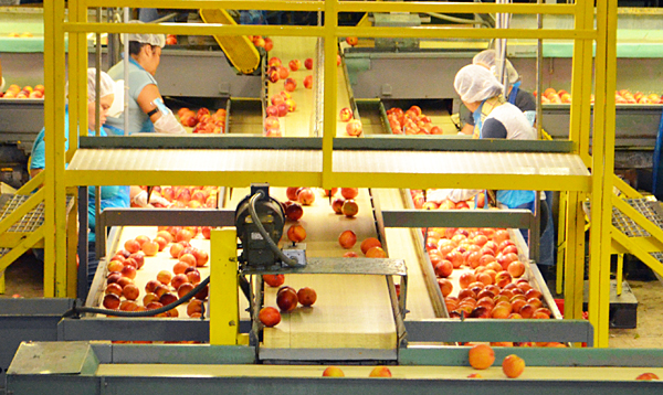 NJDA officials visit peach distribution center