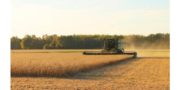 From controlling herbicide-resistant weeds to identifying and managing diseases and nematode pests, farmers need to have a well-stocked tool belt to grow a successful crop in these times of tight margins. (Courtesy of MSU Extension)