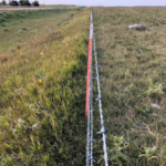 This pasture has been grazed without negatively affecting forage production. (NDSU photo)