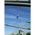 Determining the amount and timing of the last few irrigations of the season is one of the most critical water management decisions. (Courtesy of University of Minnesota Extension)
