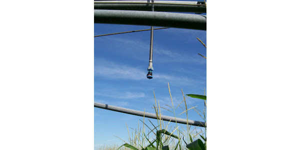 Predicting last irrigation for corn & soybeans