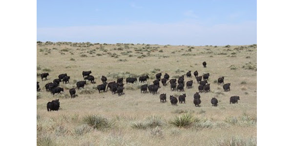 Join CCA and CSU for Ranch Gathering Sept. 6