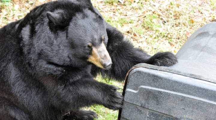 FWC receives applications for 'BearWise' funding