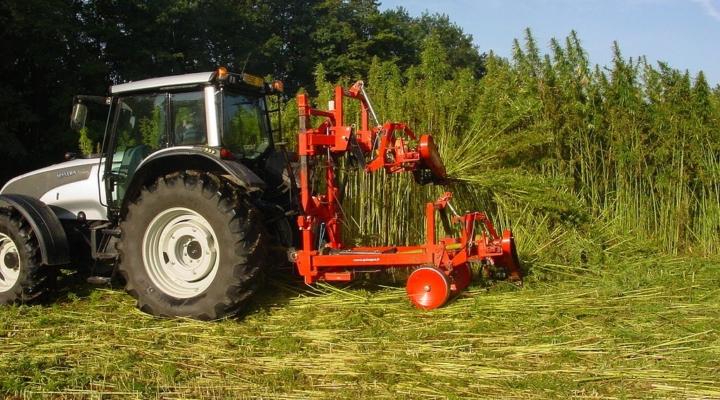 Farm bill holds hope for hemp farmers