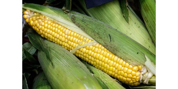 SD Corn donates $100,000 to Feeding South Dakota