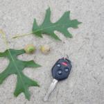 Pin oak leaves and acorns. (Courtesy of Alison O'Connor)