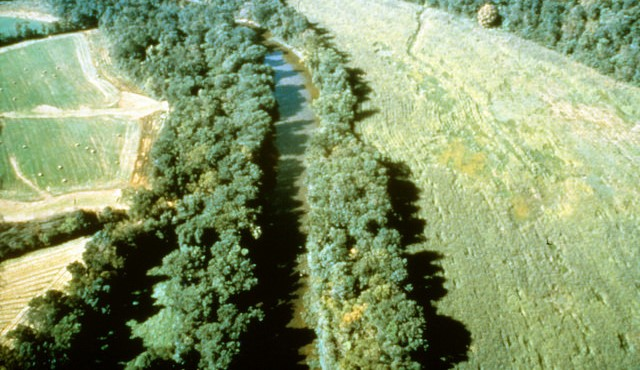 What are riparian buffer strips?