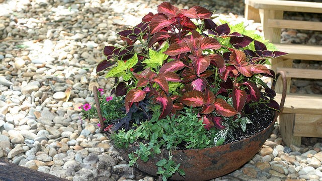 Learn about container gardening at DeBary Hall