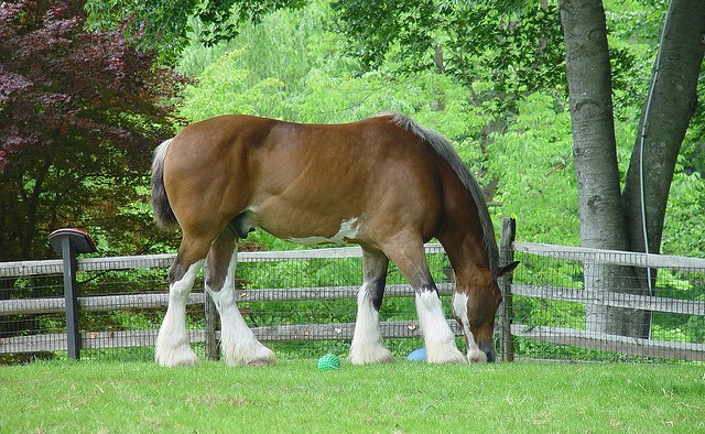 Clydesdales keep nursing home residents company, and bring back happy memories