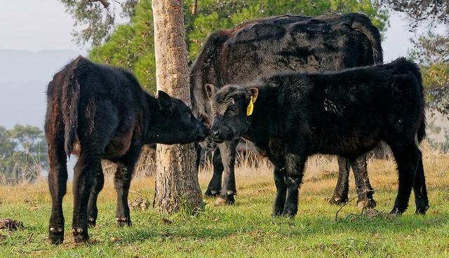 Vacancy on CDFA animal health board