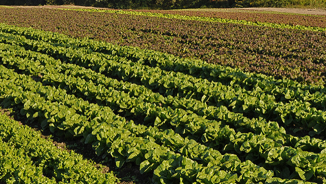 Arizona LGMA updates food safety practices
