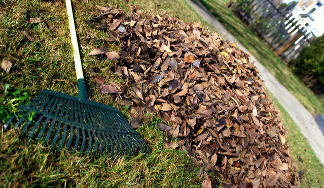 Protecting pollinators during fall garden cleanup