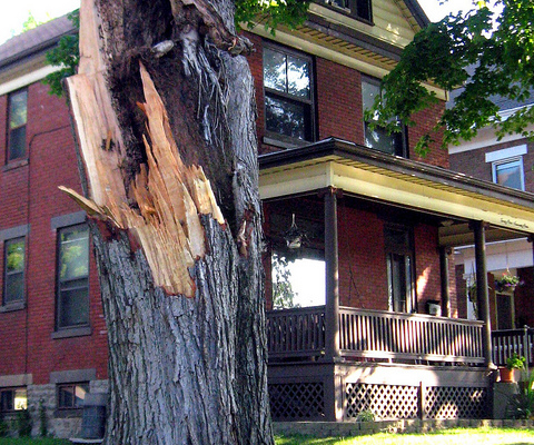 Decision-making guidelines for storm-damaged trees