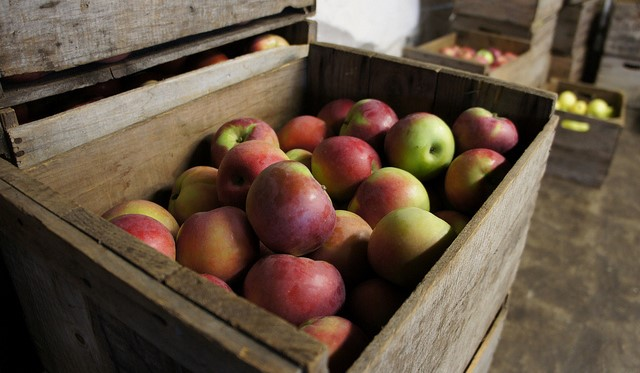 Apple Festival at the Warrensburgh Farmers' Market