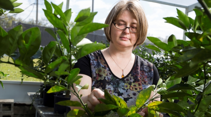 Citrus research updates, hands-on training