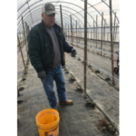Frank Gieringer, Edgerton, has found success with diversifying this traditional crop farm to include tomato-filled hoop houses (shown here), orchards and berries, bringing his son into the operation. (Courtesy of Kansas Rural Center)