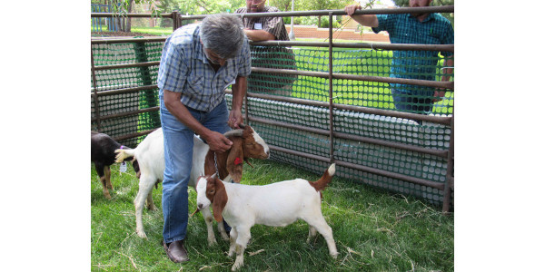 Goat producers attend production workshop