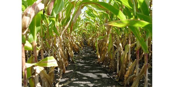 Evaluating fertilizer purchase decisions