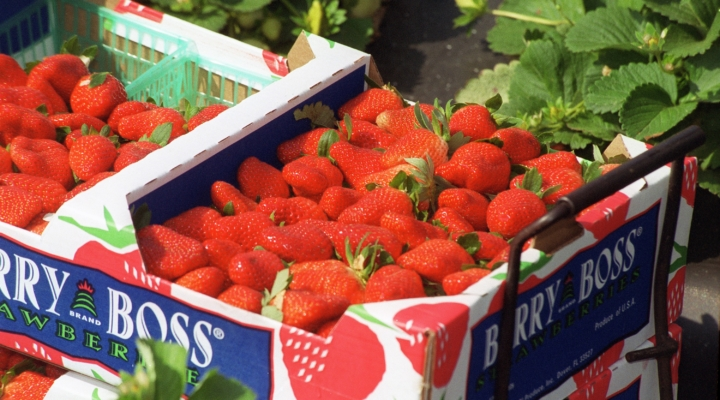 Buyers weigh in on strawberry production