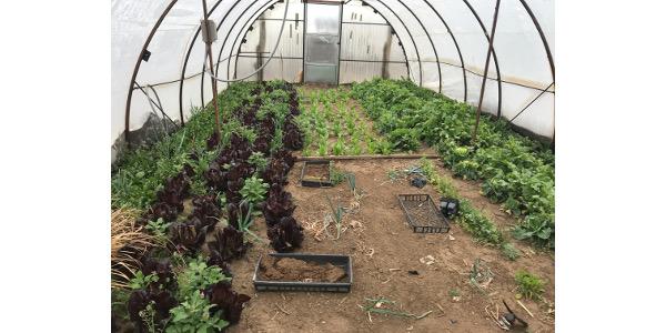 Raising vegetables on the high plains