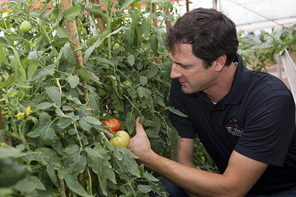 UF/IFAS team hopes to fight tomato disease