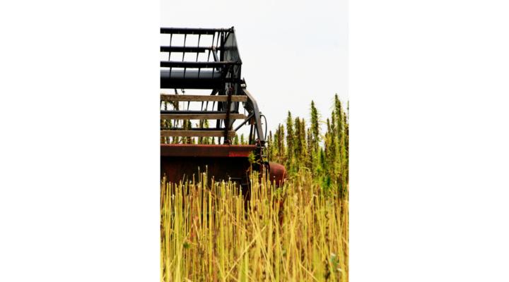 US Attorney sues hemp farm over seeds' origin