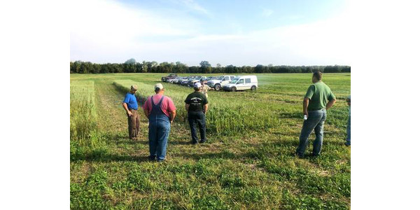 The Michigan State University Extension cover crops team will be coming to southeast Michigan for the first Cover Crop Field Walks event held in Monroe County on Oct. 4 from 5–7 p.m at Heck Farms LLC, 4345 W. Albain Rd, Monroe, MI 48161. (Photo by Ricardo Costa, MSU Extension)