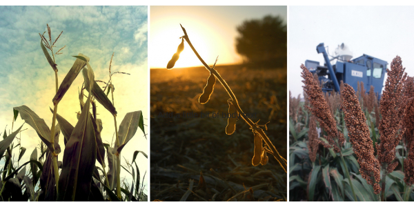 Corn and soybean forecast for record yields