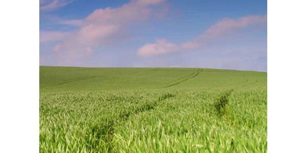 Iowa Forage and Grasslands Conference