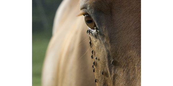 Equine Infectious Anemia confirmed in Colo.