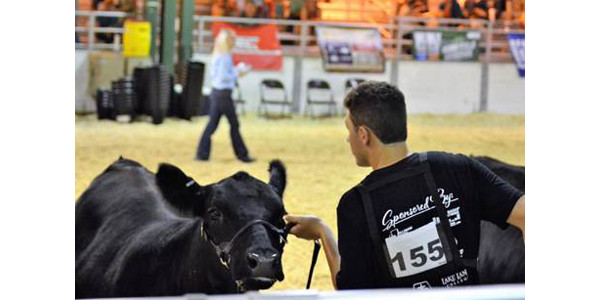Beef Showmanship takes patience and care and is another step to conquer in becoming the 2018 Master Showman at the Illinois State Fair this year for Woodford County 4-H member, Keaton Stoller. (Photo by Hayley Stoller)
