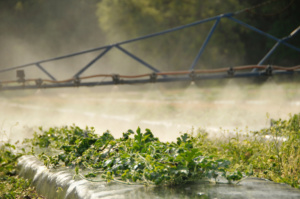 Research dollars support breakthroughs in water conservation, crop production
