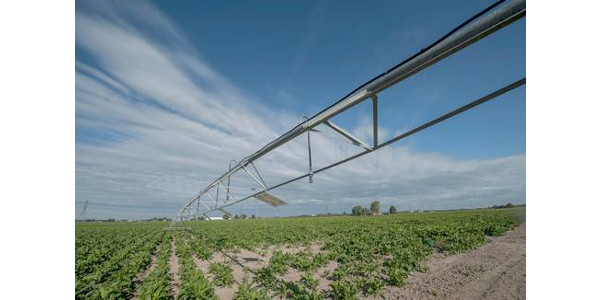 Irrigate cover crops for better emergence