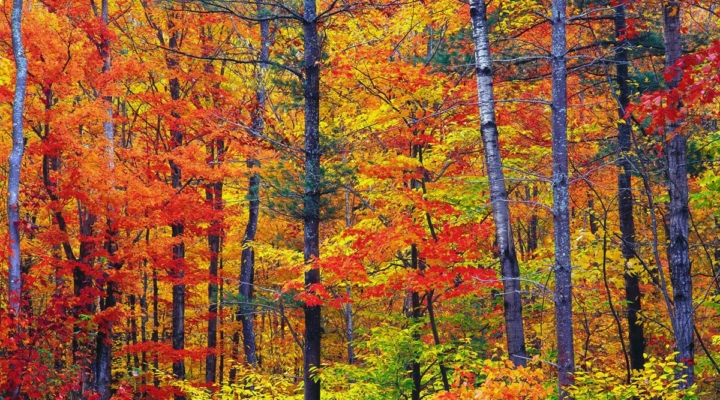 Signs point to favorable fall foliage season