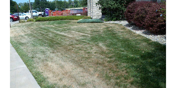 September is a good time to overseed drought-stressed lawns. (Courtesy of K-State Research and Extension)