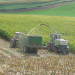 While every area of the state has had different growing conditions all have been challenging. Iowa State University Extension and Outreach beef specialist Denise Schwab said a few basic principles of corn silage harvest are critical to harvest and store a high quality corn silage feedstuff.