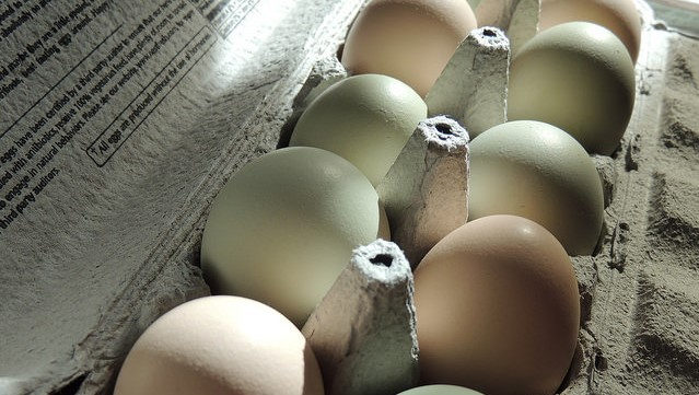 38 sick from tainted eggs from Alabama