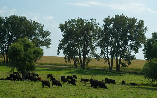 Extending the grazing season for livestock