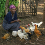 Ethiopian villager with her chickens. (photo credit: Marisol Collins)