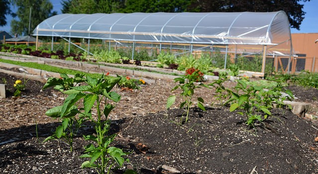 NRCS California invests $4.4M in high tunnels