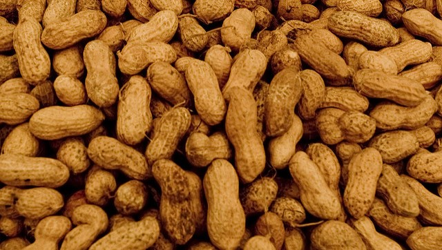 Researcher breeding drought-resistant peanuts