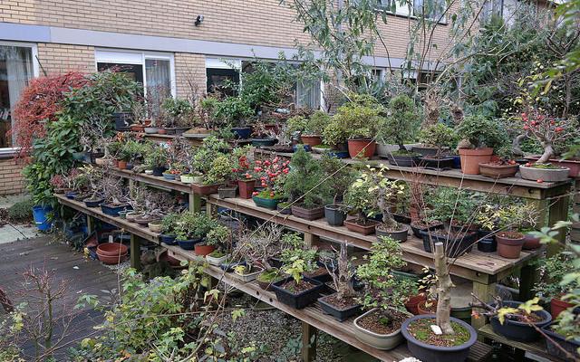 Preparing your garden bed for winter