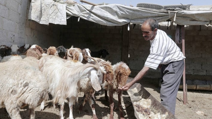 Weather, conflict take toll on Syria's agriculture