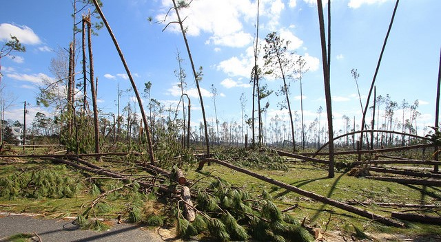 Storm caused $158M in damage to Florida crops