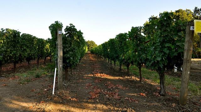 Wine Institute applauds market access gains