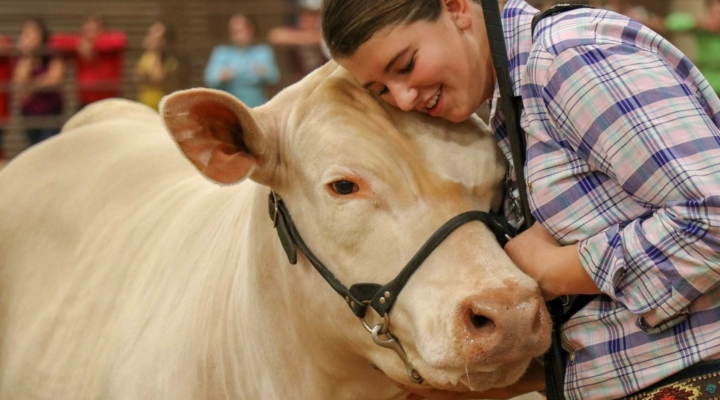 Top steer sets new record at State Fair of Texas