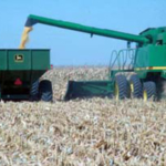 To avoid compacting more of the field, the grain cart should run down the same row middles as the combine. An auger extension may be needed on the combine to get the wheel tracks to line up. The wheel spacing on the combine, tractor, and grain cart should be adjusted to all run between the rows. (Courtesy of University of Nebraska-Lincoln)