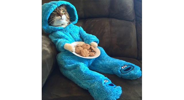 Embassy apologizes for accidental mass-mailing of invitation for 'Cat Pajama-Jam Party'