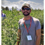 James DeDecker in a field of industrial hemp near Denver, Colorado. (Courtesy of MSU Extension)